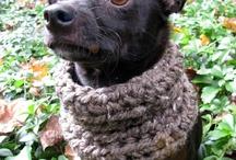 κατοικίδια/ crochet pet