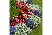 Gardening Ideas 1 / by Paule Sullivan