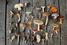 Mushroom fanatic