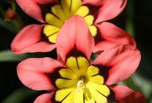 Flowers / #flower