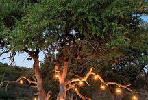 Romance at Madikwe Safari Lodge
