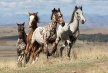 mustang (paard)