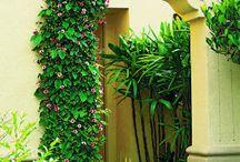 Courtyard Inspiration / by Snobdra Peabody