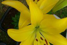 As flores do jardim da minha casa