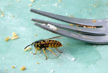 Insekten und Wespen vertreiben