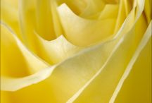 Yellow / by Kathy Willhite