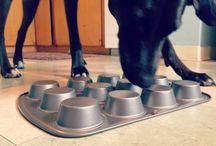 Dog Tips & Tricks