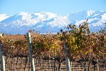 Ruta del vino en Argentina / by NOMADE :)