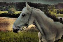 Kone.relax,priroda / O odreagovani zo skutocnej reality