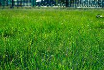 turf supplies eastern suburbs