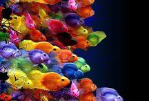 Colours! / by Ruby Eskaf