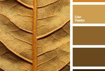 Paleta de. Colores