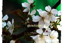 planta / jardin / planta flor