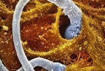Microscope Art Inspiration