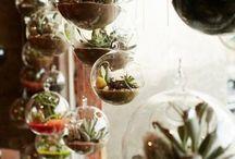 Mimi's love of terrariums / Mimi's love of terrarium