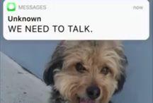 Dog Lover Videos https://scontent.cdninstagram.com/vp/5a04c6d51c2d7d7f9405e59051783ab0/5A7F230F/t51.2885-15/e35/27578588_584878311854762_414182508310036480_n.jpg