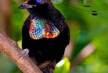 Nature template - Birds