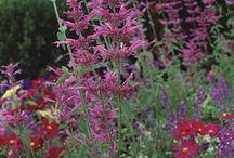 Tuin - bloemen & kruiden tuin inspiratie