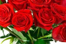 Valentine's Day Roses / One of the most beloved flowers to express Love <3