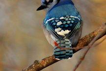 Beautiful Birds / by Deborah Irish