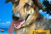 Udostępniacz wielorasowy / Kompaktowa wersja Uciechowiaków do udostępniania :) Wyraża więcej niż 1000 słów! #psy #adopcje #schronisko #polska #dogs #adopt #shelter #poland