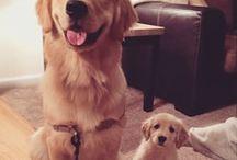 Pets & Animals / Cute animal pics