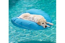 Pets and Swimming Pools
