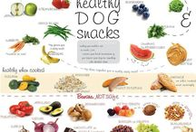 Dog Treats/Foods