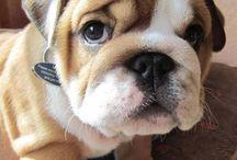 Bulldogs / Nolostdogs.org