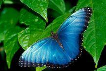 Batterflies!!!!!!!!