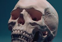 anatomy_scull
