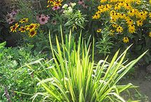 Get Busy Gardening! / Gardening is what it's all about - indoor, outdoor, vegetables, annuals, perennials, tropicals, houseplants - even water gardening!  Tips for the DIY beginner gardener!