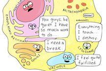 Buňka, Viry, Bakterie
