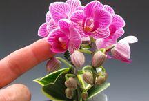 Mini orhideák