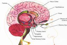 뇌 후각 미각