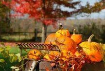 Fall / by Jennifer Dodson
