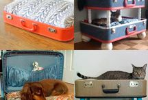 Ideas for cats / Nice and funny design for cats and catslovers