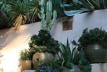Wonderful succulents & cacti