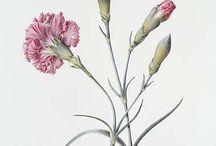 Kvety reprodukcia