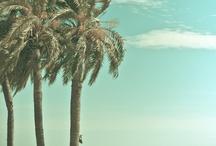 ~playa y palmeras ~