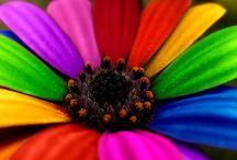 Colorful / by Sharon (Ferrari Florist - Santa Cruz, CA) Richardson