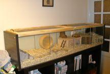 hamsterin terra ideas