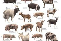 Animais Domesticos