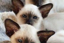 Gatos y otros felinos