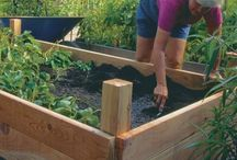 Raised vegetable and herb beds