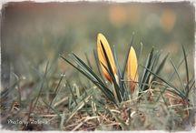 Flowers / Цветы / Фотографии цветов и растений