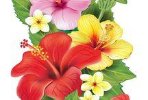 fleurs diverses / Toutes les belles fleurs