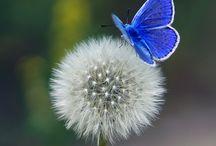 Vole vole vole papillon