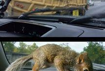 Squirrel Memes