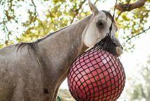 Horse Things / by Hannah Morris